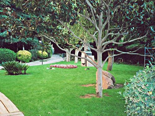Jardines rboles y plantaciones - Jardin con arboles ...